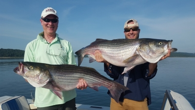 Fishermen with two huge Norfork Lake striped bass.