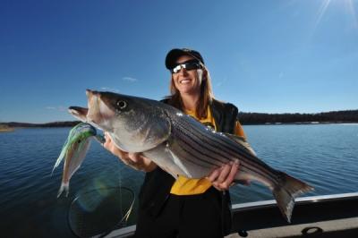 Striped Bass fishing on Norfork Lake